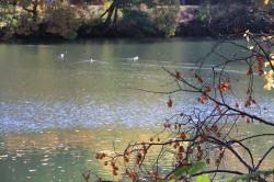 赤谷池秋2